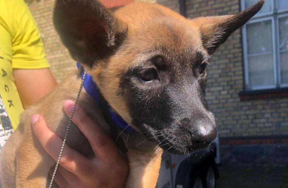 FOTOD | Lääne prefektuuri meeskonnaga liitus vahva koerakutsikas