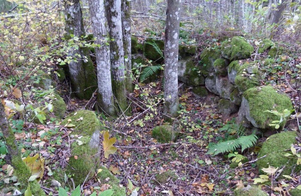 Pildil olevad kivid näitavad, et kunagi on selles paigas asunud lubjapõletusahi.