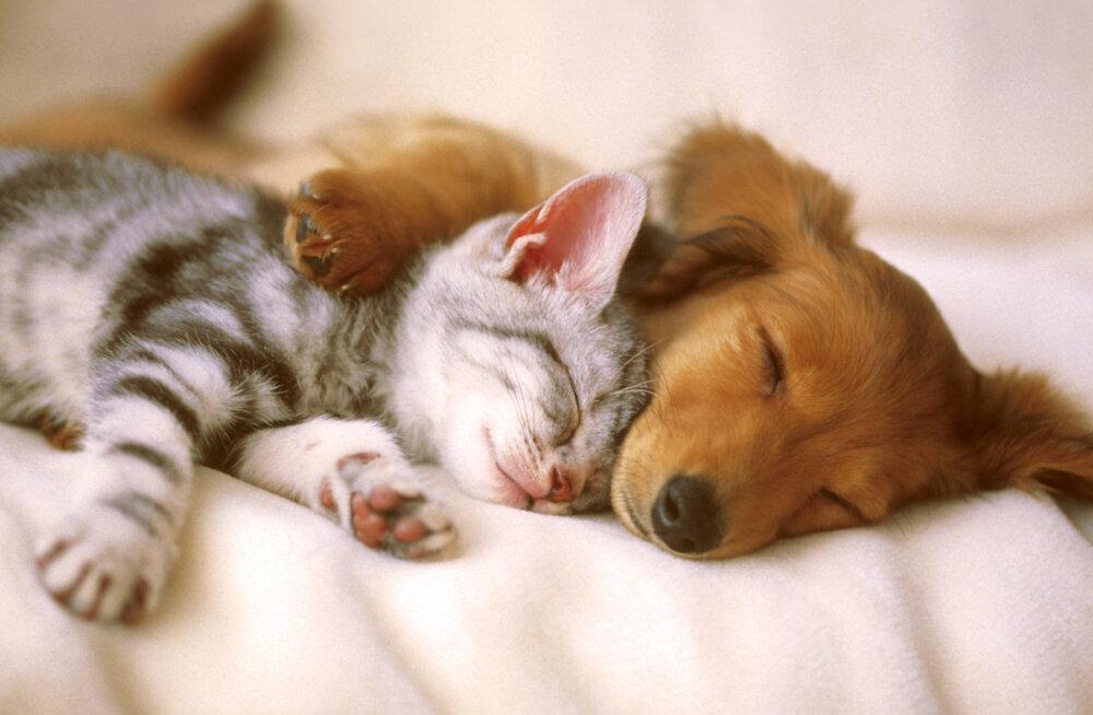 Muhe TEST: Saa teada, kas oled kassi- või koerainimene