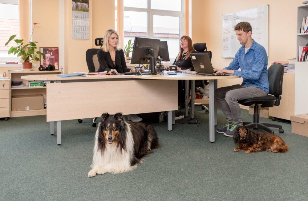 Koerad keeltekoolis