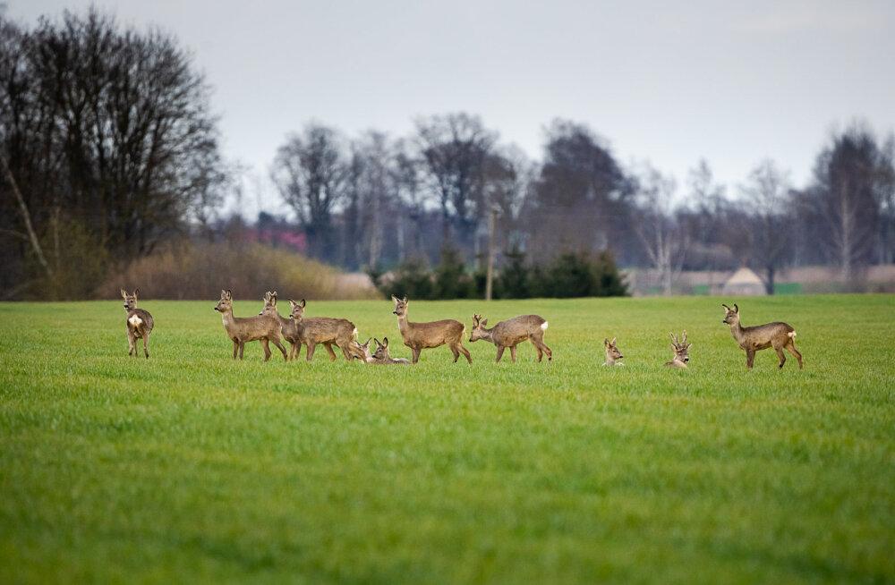 10 природных троп Латвии, на которых стоит побывать этим летом