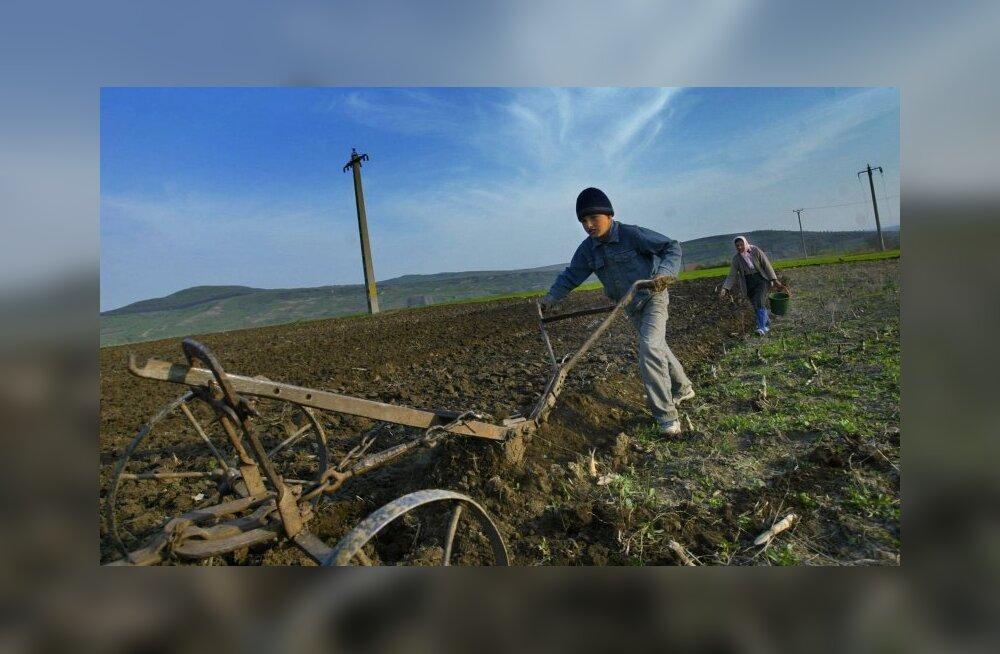 Põllumees: põline sisserändaja? Maaharimise tõid Euroopasse immigrandid Lähis-Idast