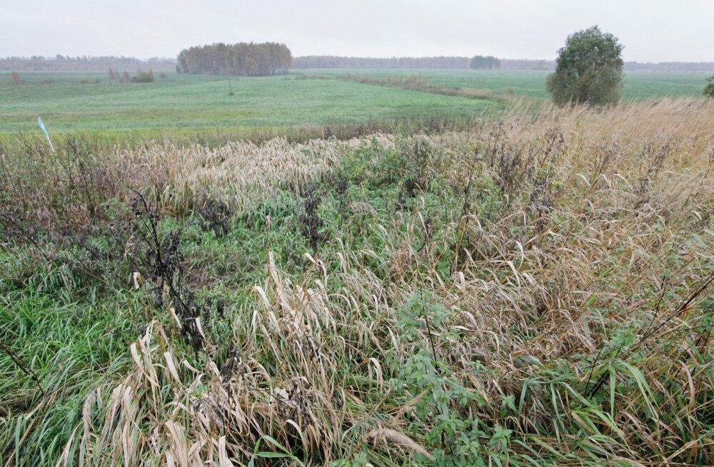 Mida suurem pind, seda loodussõbralikum see ala on.