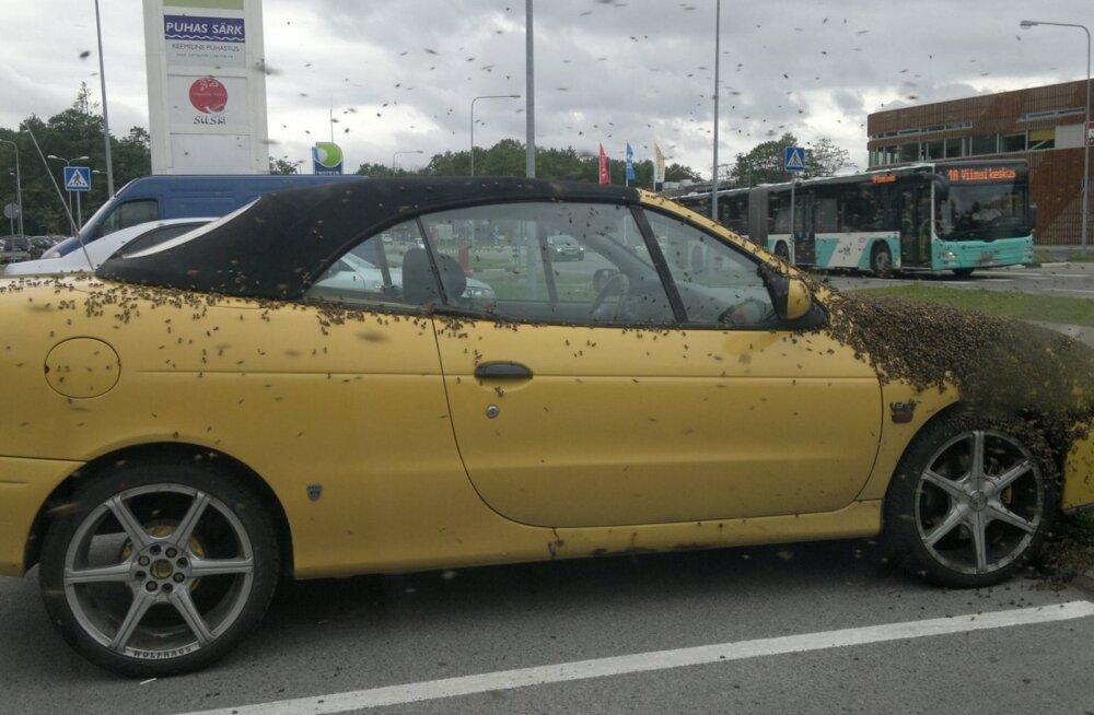Sülemlevad mesilased valisid uueks koduks meekarva sõiduauto