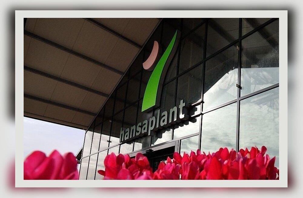 Совет от Zave.ee: Hansaplant рассказывает, как ухаживать за орхидеями