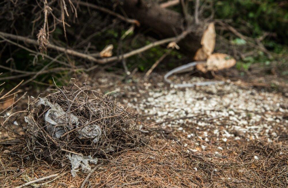 Heki langetamisel kannatada saanud linnupesa.