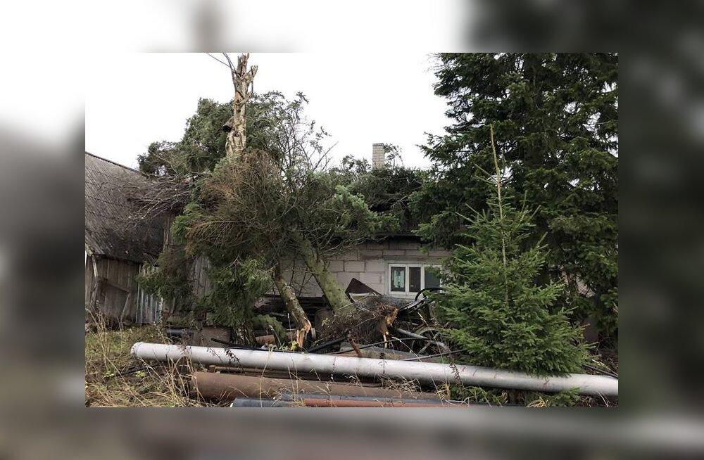 Страховая компания: суммарный ущерб от октябрьского шторма превысил 100 000 евро