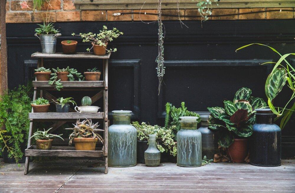 Väärt nõuanded | Kuidas suvel toataimi hooldada?