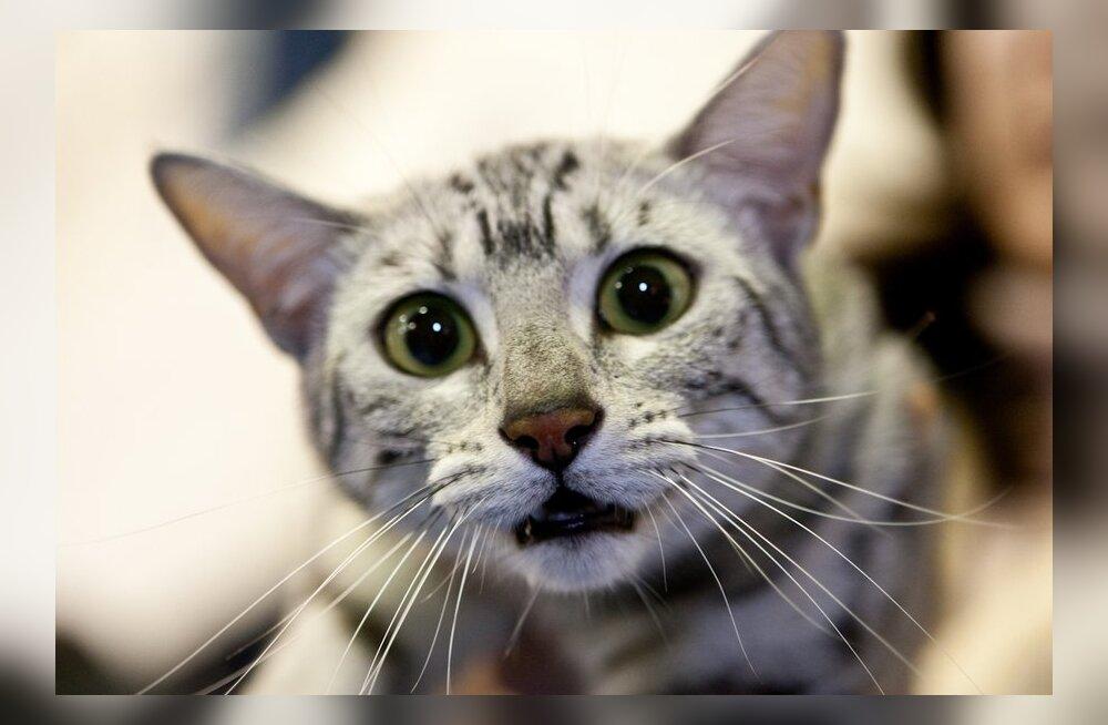 Igas kolmandas inimeses peituv parasiitnakkus aitab eriti edukalt surra... kassipidajatel naistel