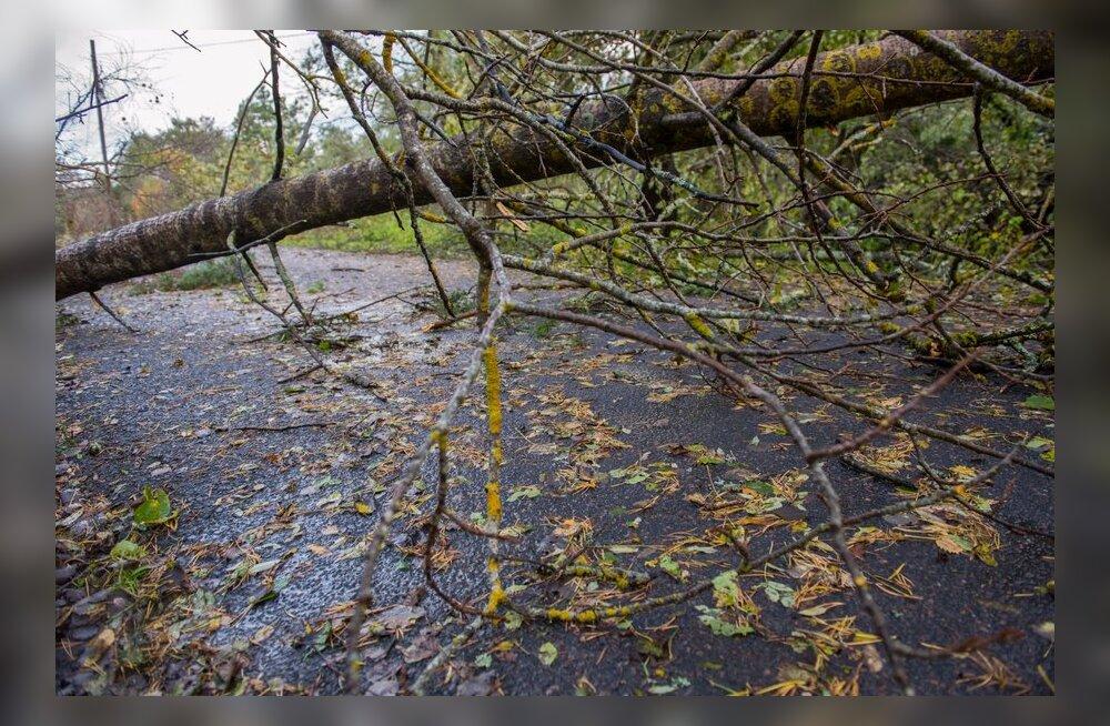 Tormist langenud puud