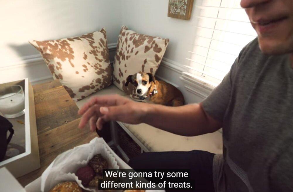 LIIGUTAV VIDEO LEMMIKLOOMAPÄEVAKS   Varjupaigast toodud koer saab pärast kolme aastat üle hirmust inimese ees