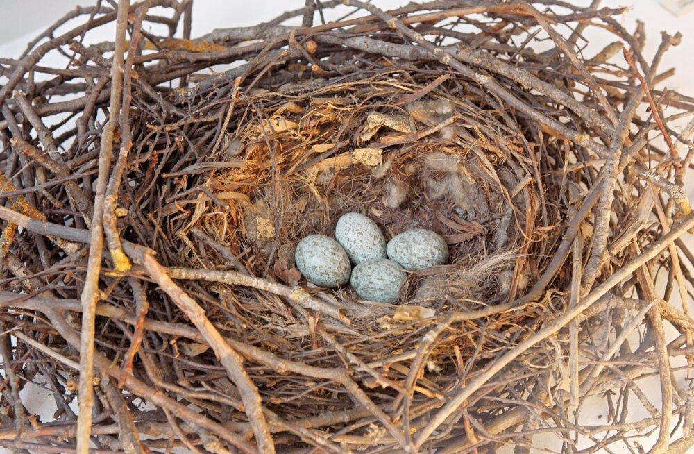 Viimsi vald: päästame kõik linnud, keda veel päästa saab
