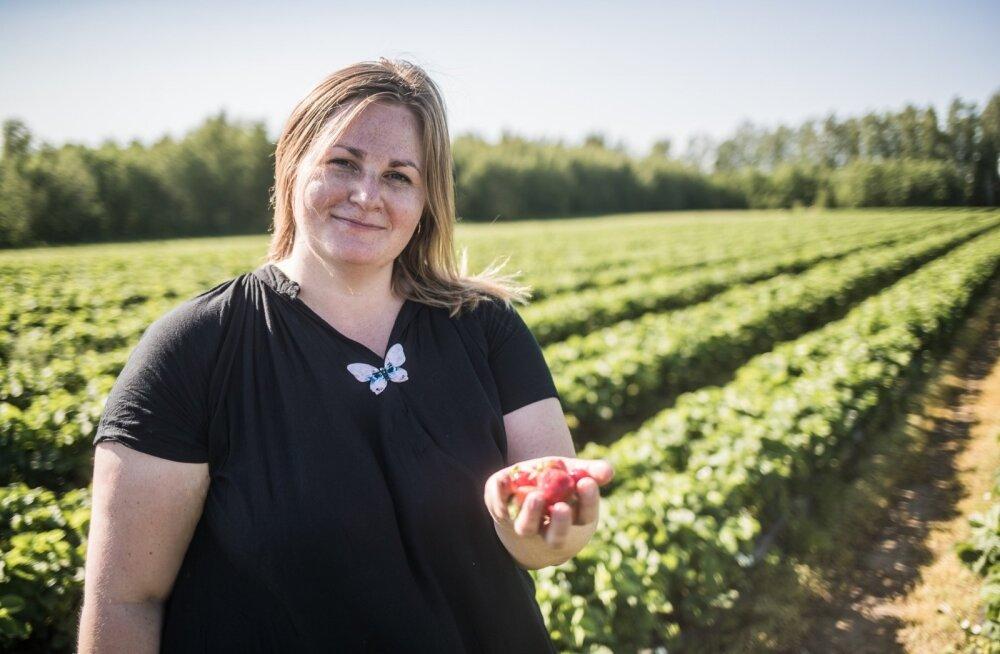 Laari talu perenaine Kadri Nebokat korjas nädala alguses esimesed punased maasikad.