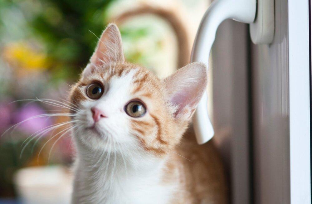 Miks kassid pea pealt silitamist jumaldavad?