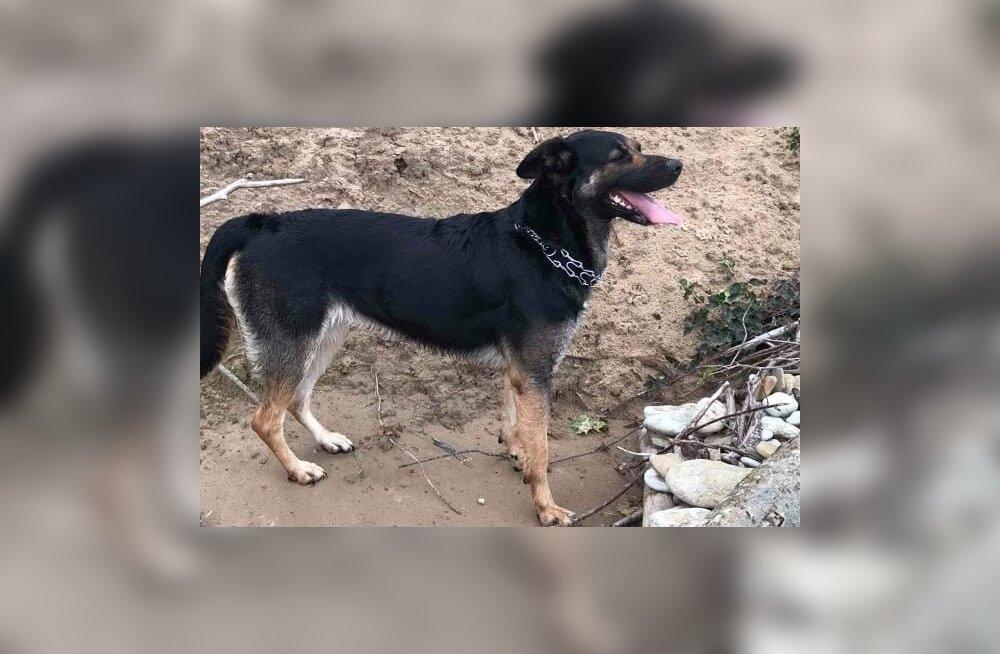 В Ида-Вирумаа собака провела больше трех недель в квартире с умершим хозяином