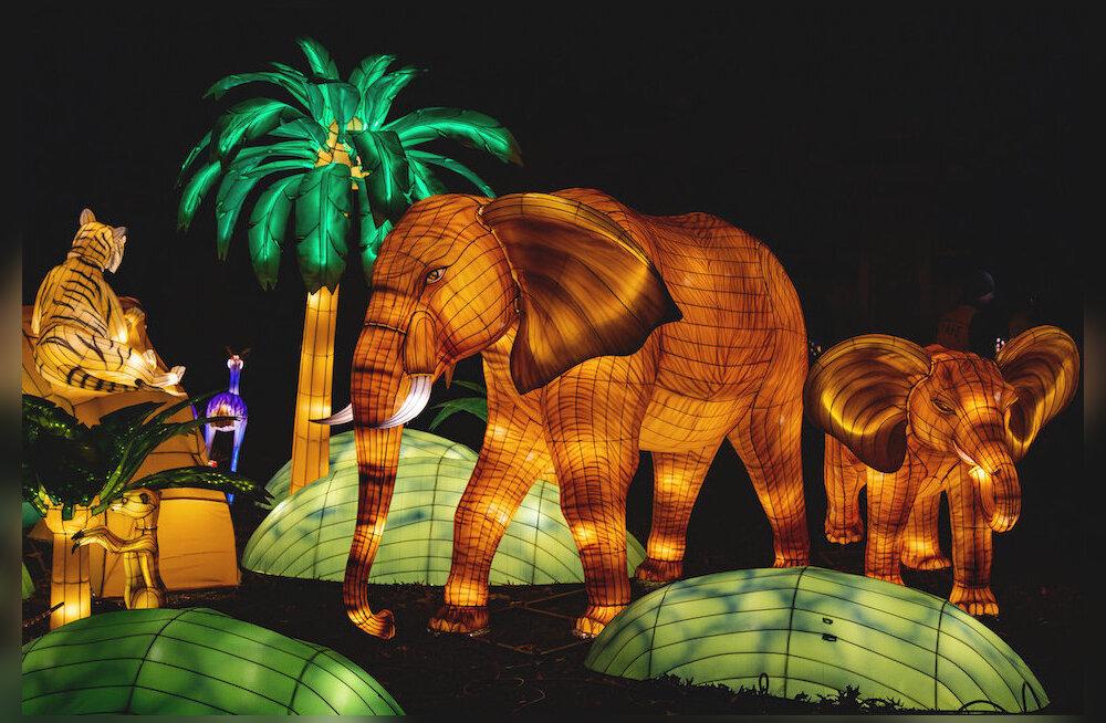 Külasta koos perega! Suurim Aasia laternafestival jõuab esmakordselt Eestisse: juba paigaldatakse lauluväljakule hiiglaslikke valgusskulptuure