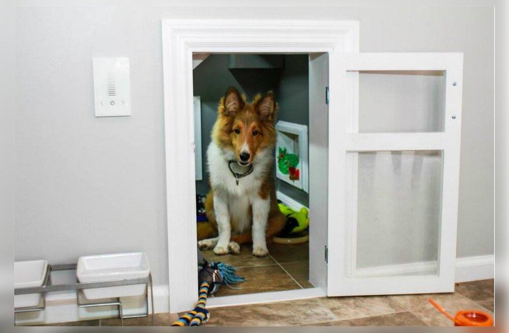 FOTOD: Luksuslik koeraelu! Neljajalgsele sõbrale meisterdatud uhke tuba lööb Facebookis laineid