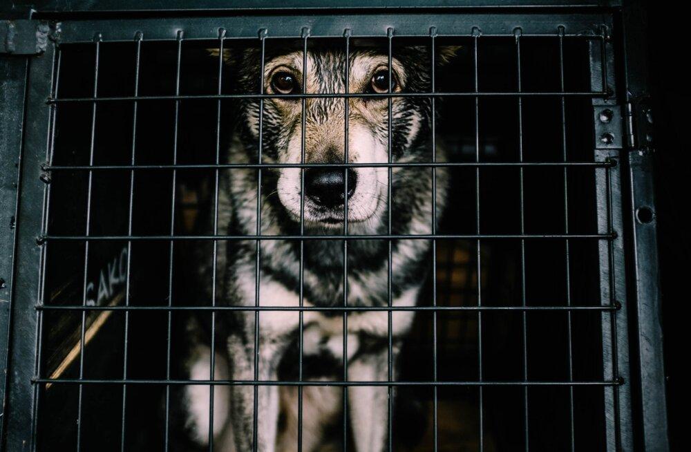 Сотрудники аэропорта заморили пса голодом и оставили погибать в клетке