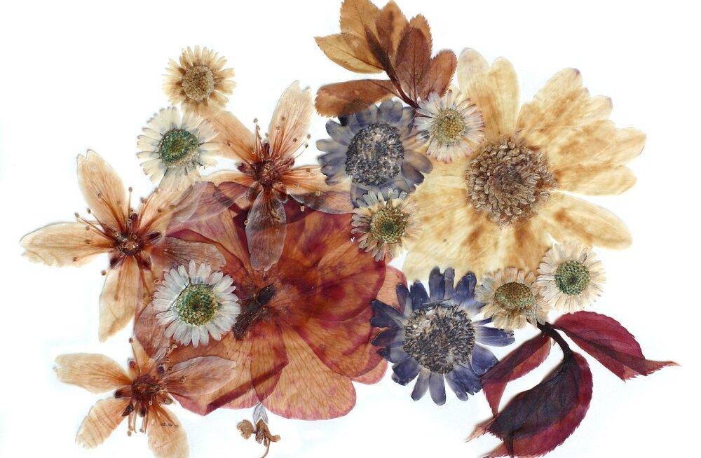 Kuivatatud taimi on hea talvel kasutada mitmesuguste esemete kaunistamiseks.