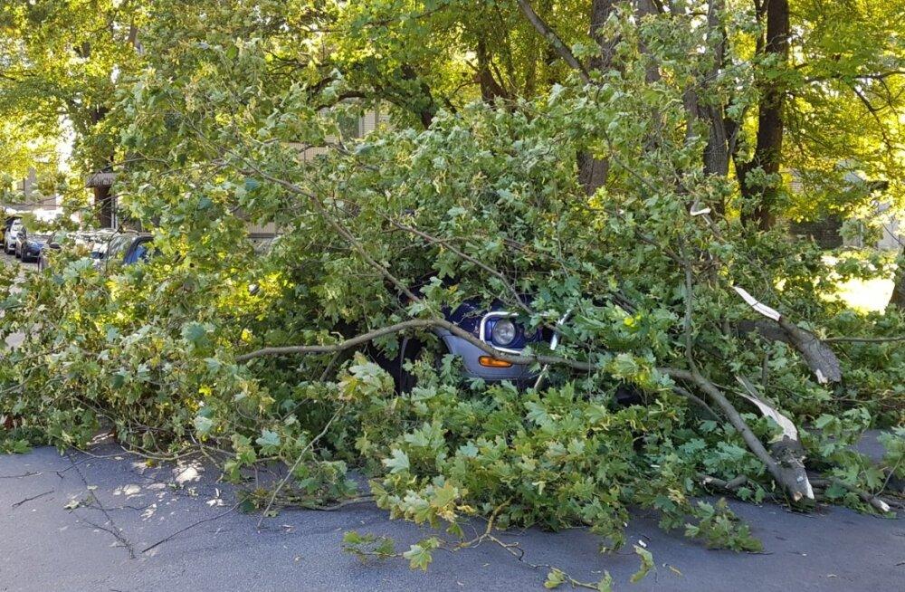 Sügistorm murdis Tallinnas Asula tänaval maha puu