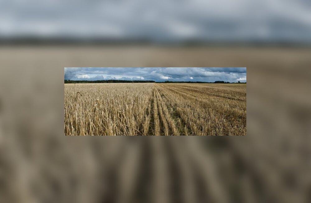 Kehv viljahind jätab põllumehe rahata