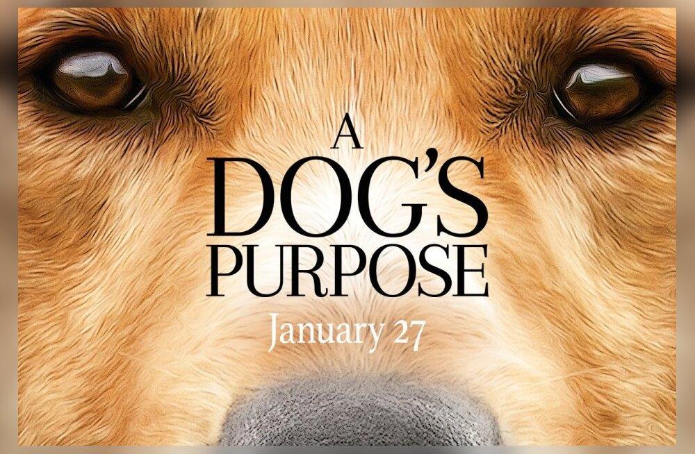 """Perega kinno: Kinoekraanidele jõuab erakordselt armas koerafilm """"A Dog's Purpose"""""""