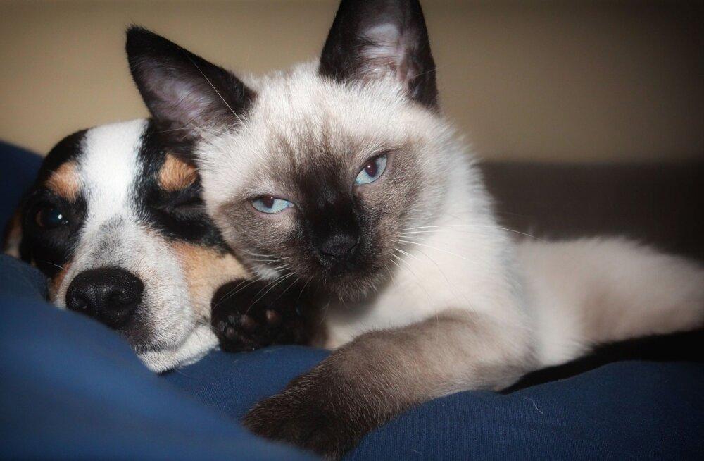 Muhe TEST: Kas oskad ära arvata nende pehmete ja armsate loomakõrvade tõelised omanikud?