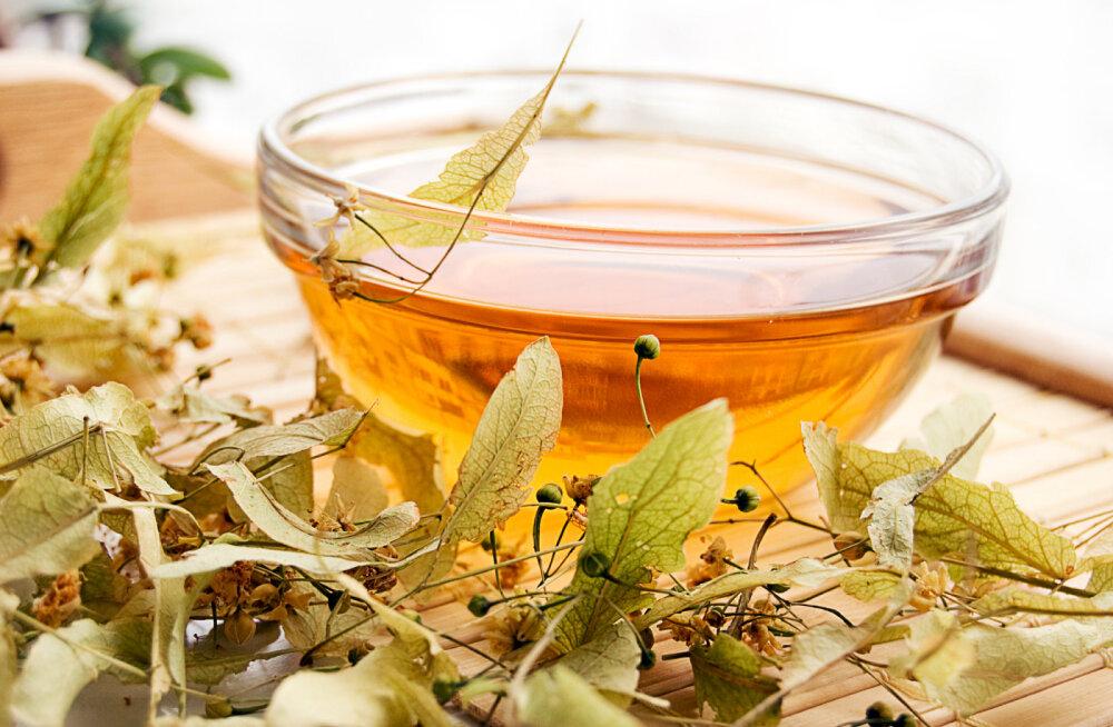On aeg korjata pärnaõisi: kuldne pärnaõis turgutab tervist ning leevendab külmetust ja grippi
