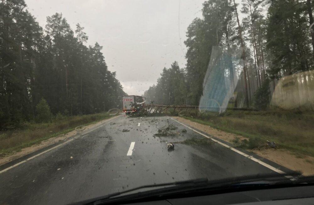 Torm möllab: Riiast Tallinna sõitnud Lux Expressi bussile kukkus puu esiklaasi