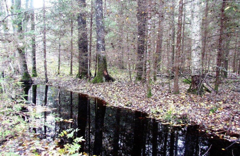Leili metsalood | Ühe uduse päeva rännakud