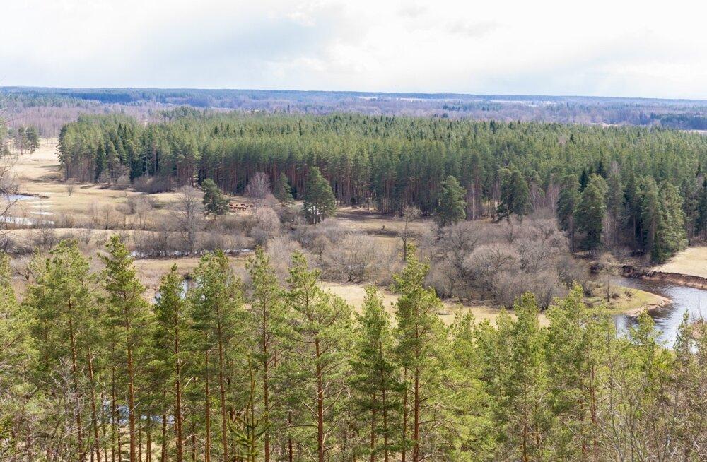 Rahvusvaheline uuring: kliimamuutustest mõjutatud metsad on intensiivselt muutumas