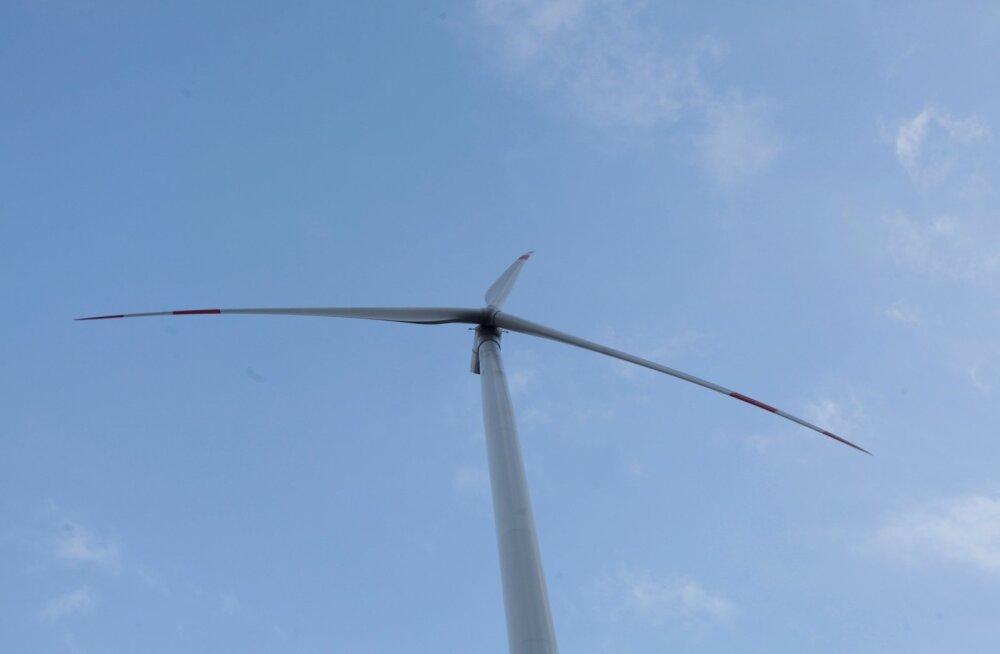 Sõnajalgade tuulik Saaremaal, Salme külas