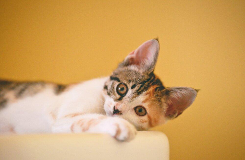 Ära astu ämbrisse! Kuus tüüpilist viga, mida kassi söötmisel tehakse