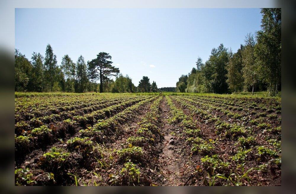 Seitse olulist küsimust mahepõllumajanduse kohta