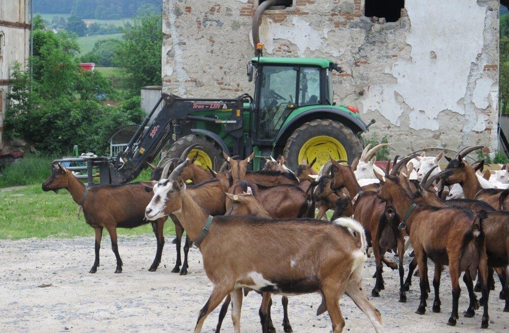 Tšehhi farmid