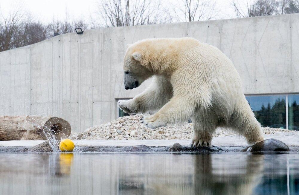 Jääkarupäev Tallinna Loomaias