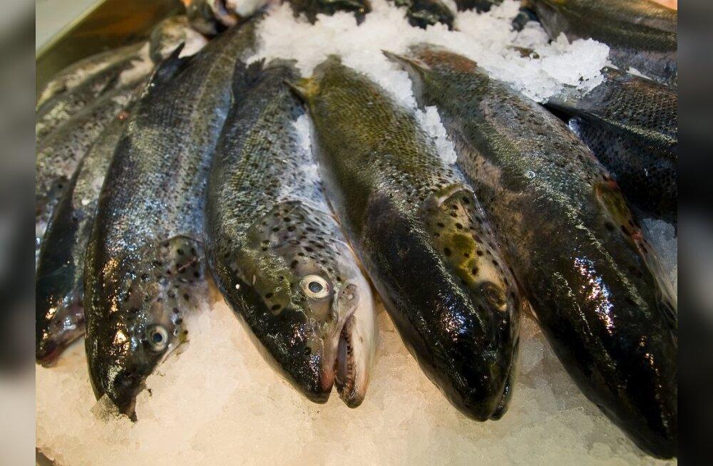 Levinud veendumuse kohaselt kaladel tundeid ega valutaju pole.
