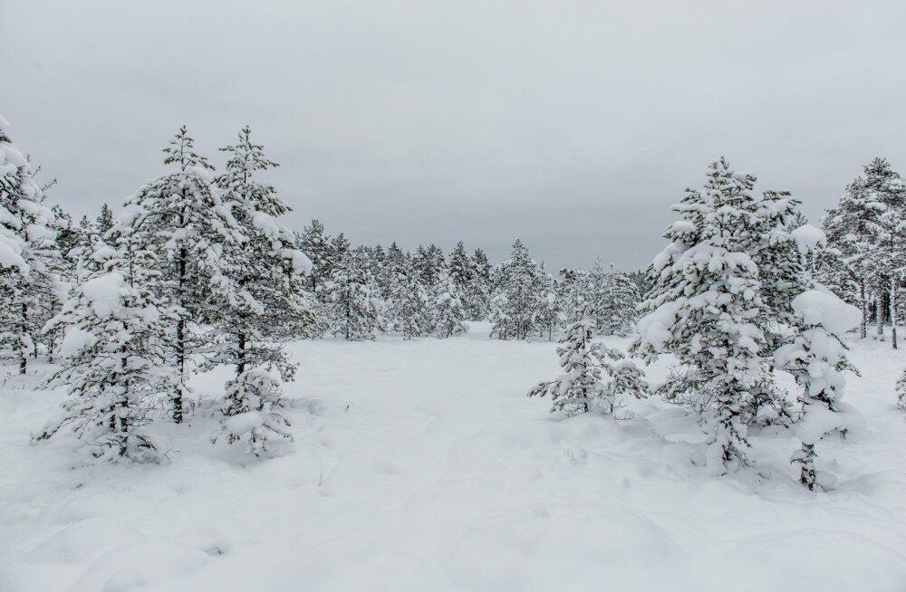 Ühes metsas uuritud süsinikuringest üldistuste tegemine kõigile Eesti metsadele on väär