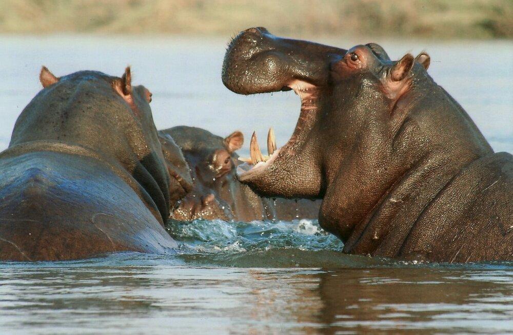TOP 5 | Need on maailma kõige ohtlikumad loomad