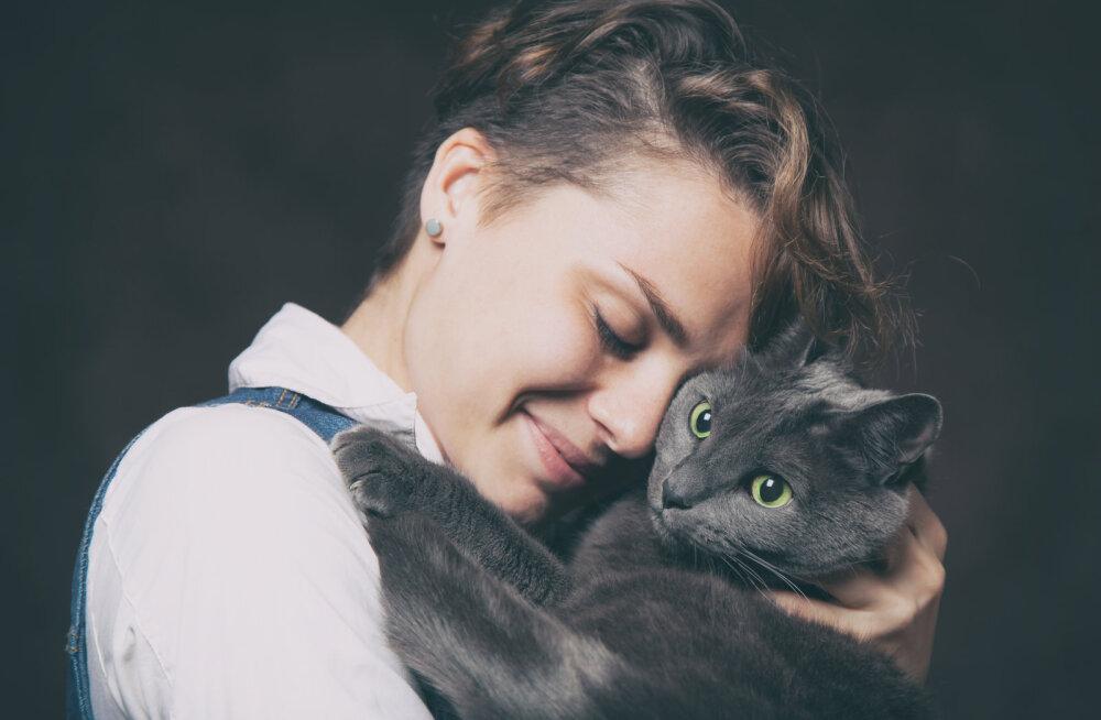 Põnev: kas kassidele meeldib, kui neid kallistatakse?