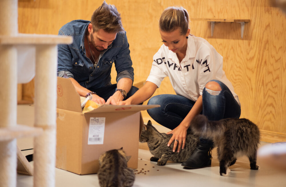 Sõidujagajad tulid varjupaikadele appi: annetused viiakse loomadele kohale tasuta