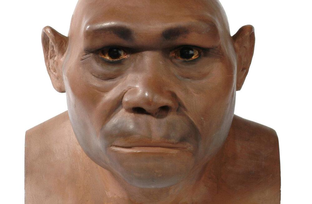 Inimeste müstiline eelkäija: kus püsis Homo erectus liigina kõige kauem ja kaua?