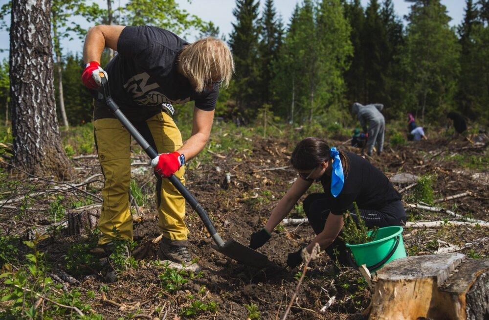 Eelmisel aastal istutati Eestis rekordilised 33,3 miljonit puud