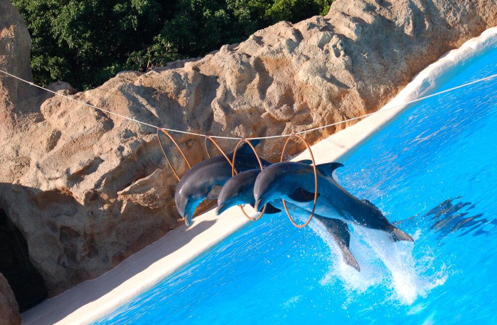 10 лучших зоопарков Европы