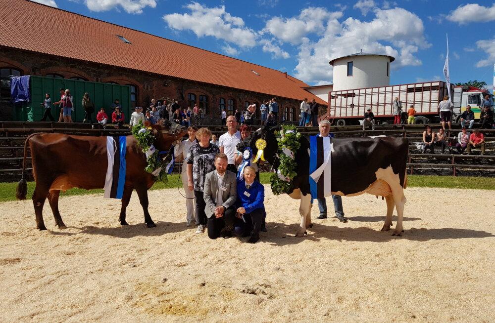 Eesti kauneimad lehmad on Mara ja Maroola