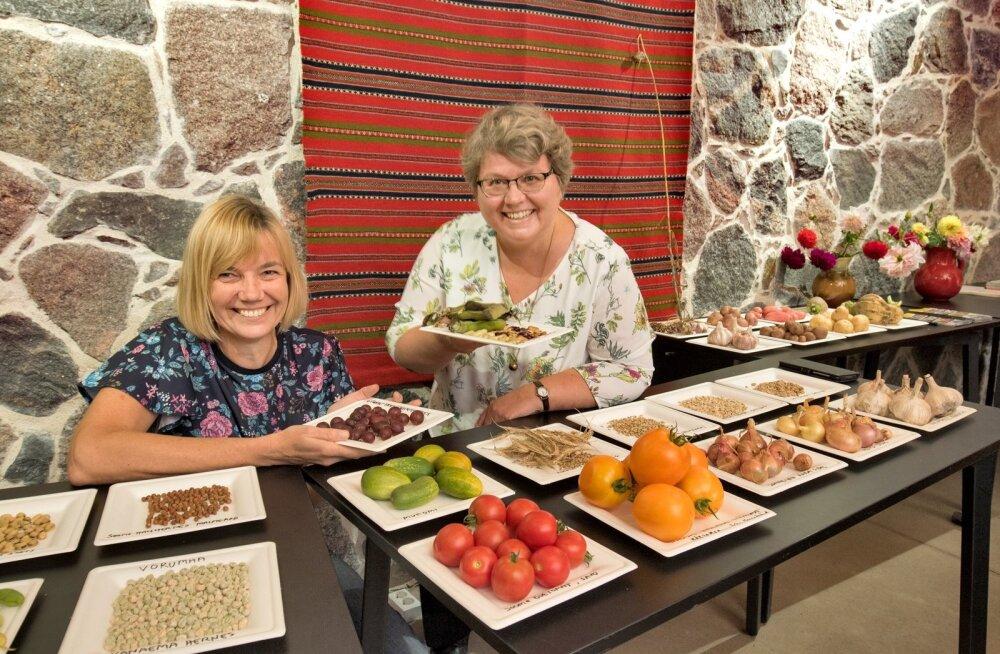 MTÜ Maadjas juhatuse liikmed Anneli Banner ja Annika Michelson on küll rõõmsad, et neil on õnnestunud aedadest üles leida nii palju põlvest põlve kasvatatud põlissorte, kuid nende seemneid Eesti seadused müüa ega kinkida ei luba.