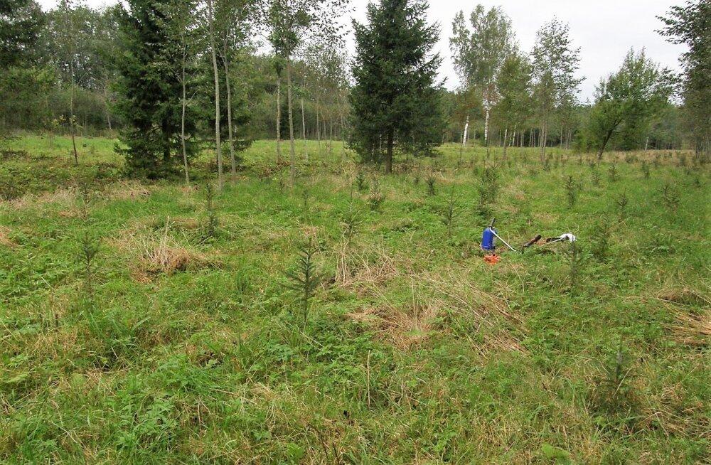 Leili metsalood | Mets kasvab külge