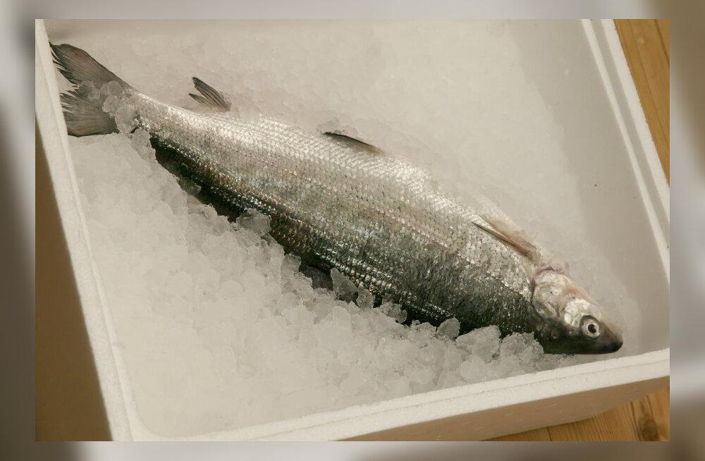 Kalur peab saama oma saagist maksimaalse hinna