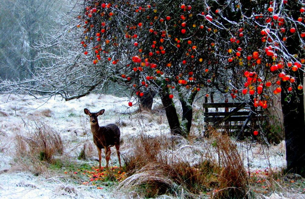 Зимние каникулы в Северной Европе: самое популярное место для отдыха в холодное время года