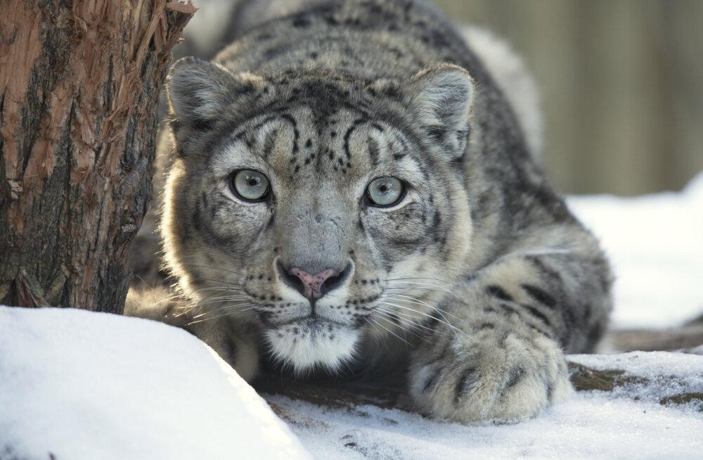 Kõige ekstreemsemad ekskursioonid maailmas, et näha eksootilisi loomi